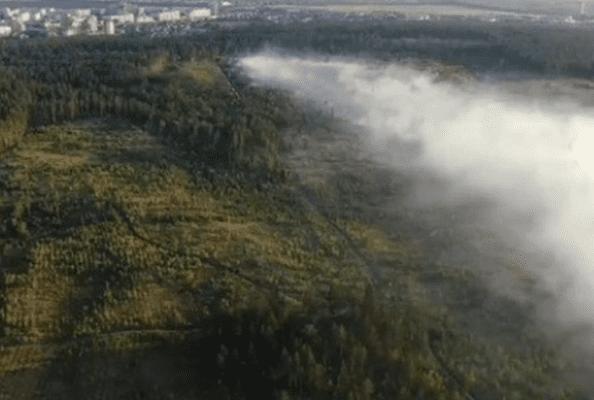 Предварительная причина пожара втольяттинском лесу – поджог