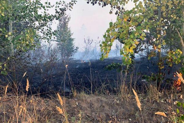Утром в субботу в Тольятти был ликвидирован лесной пожар, который тушили со среды | CityTraffic