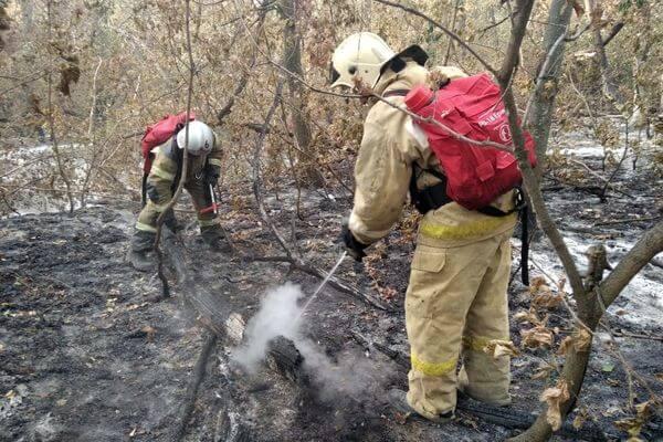 Плошадь активного горения в Бузулукском бору составляет 15 га | CityTraffic