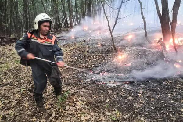 В Самарской области более 300 человек продолжают тушить пожар в национальном парке Бузулукский бор | CityTraffic