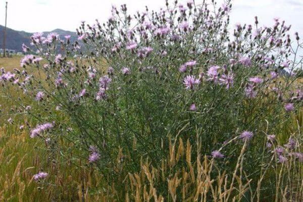 Из Самарской области в Казахстан не выпустили 500 тонн пшеницы | CityTraffic