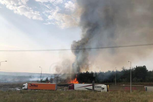 На въезде в Тольятти пожарные 5 часов тушили лес | CityTraffic