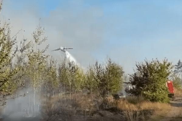 Площадь активного горения в тольяттинском лесу составляет 0,5 га | CityTraffic