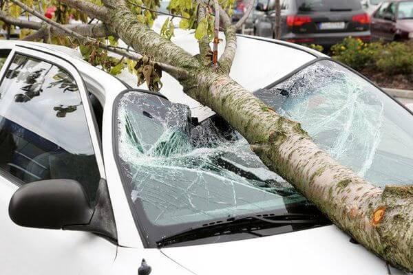 Самарские автомобилисты взыскали с мэрии компенсации за ущерб от упавших на авто деревьев | CityTraffic