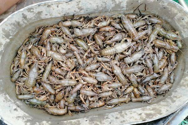 За добычу 614 раков браконьеров из Самарской области оштрафовали на 7 тысяч рублей | CityTraffic