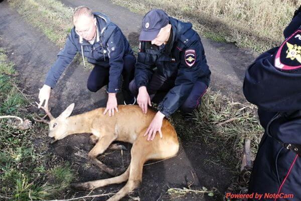 За сентябрь на дорогах Самарской области сбили насмерть 4 диких животных | CityTraffic