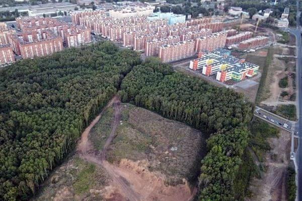 Жители Самары попросили президента спасти от вырубки лес в поселке Мехзавод | CityTraffic