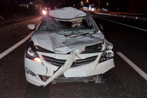Иномарка сбила лося на трассе М-5 в Самарской области | CityTraffic