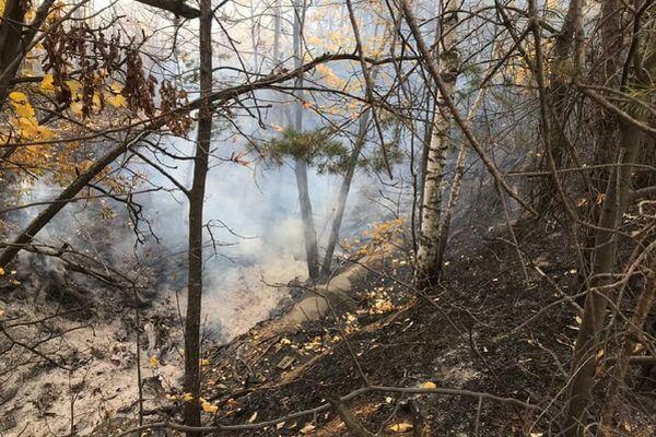 В Тольятти тушат лесной пожар на площади более 4 га | CityTraffic