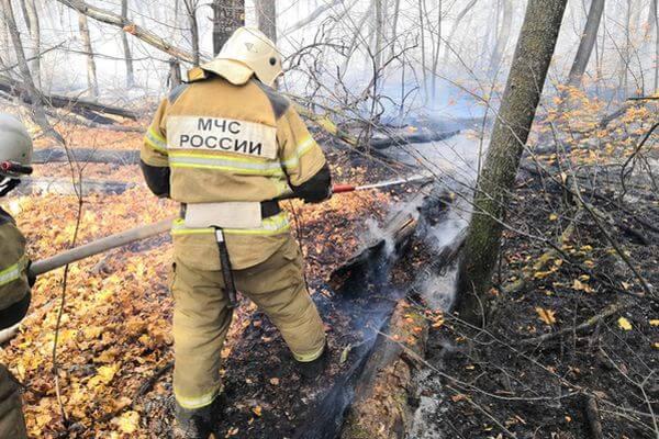 Лесной пожар в Тольятти потушили за 5 часов | CityTraffic